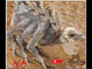 spiderchicken